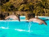 Dauphins_1